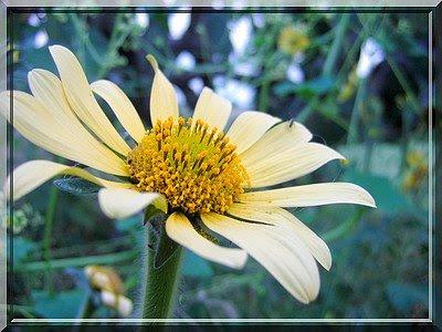 Blume, zelten, camping, Aguascalientes, Mexiko