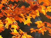 Adagio de otoño imagenes otono