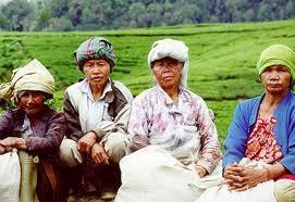 sumber gambar : gedepangrango.org