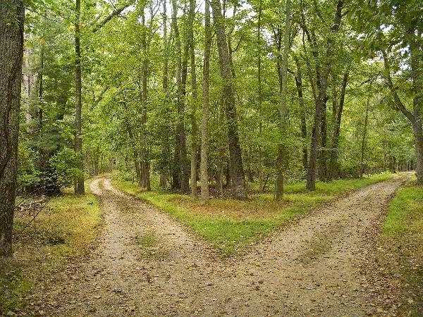 the idea of making decisions in the poem the road not taken by robert frost Robert frost: poems summary and analysis of the road not taken (1916) buy study guide the narrator comes upon a fork in the road while walking through a yellow wood.