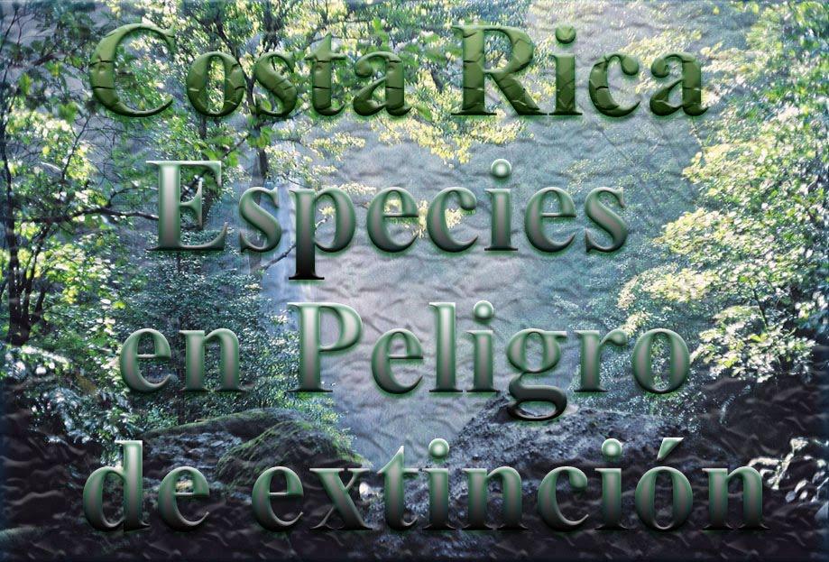 fotos de animales extinguidos - Fotos de animales extintos que posiblemente nunca hayas