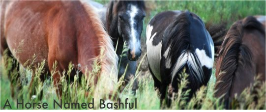 A Horse Named Bashful