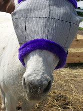 """Diesel thinks his new """"bonnet"""" is ridiculous! But it keeps the flies off!"""