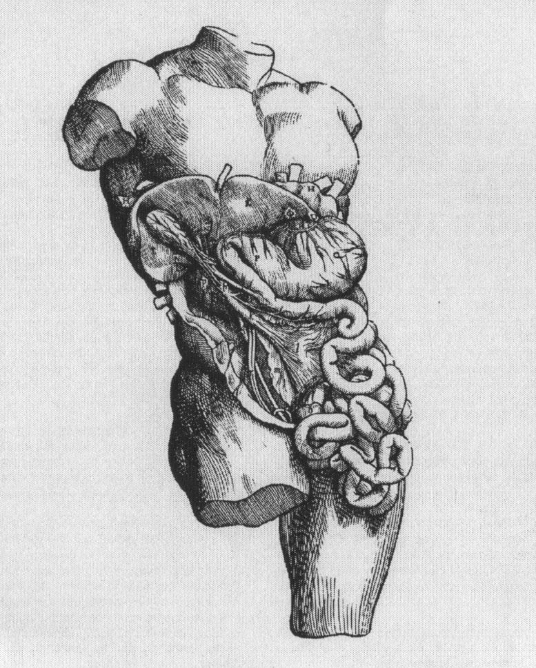 obrázek z knihy vesaluise