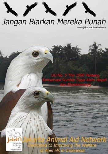 Selamatkan Elang Bondol (Save The Brahmiy Kite)