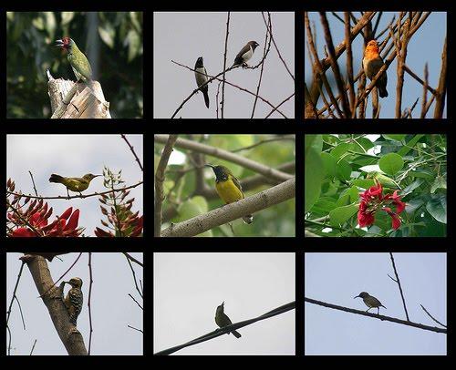 Burung-burung Jakarta