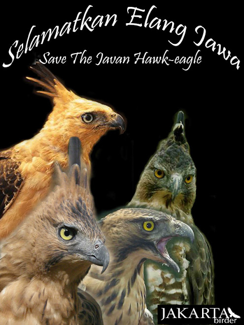 Save The Javan Hawk-eagle