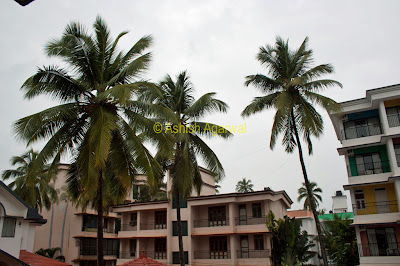 View of apartments and trees at the Palmarinha Resort in Goa
