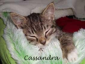 Mijn lieve Cassandra