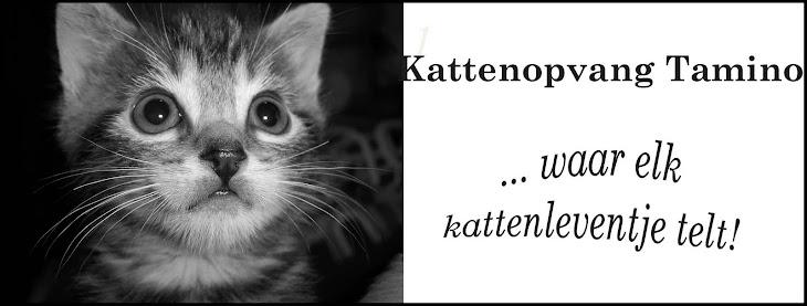 Volg hieronder de verhalen uit de kittenopvang