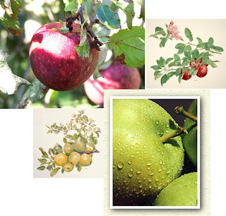 Oh dear, I think my inner Jewish roots are showing…but I want to emphasize  that I am planning on including fruit (specifically apple) trees in the  potager.