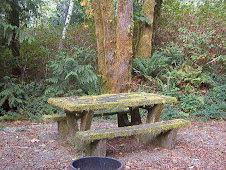 A Moss-Covered Picnic Table - Gold River