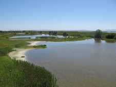 A view from the tower at George Reiffel Bird Sanctuary