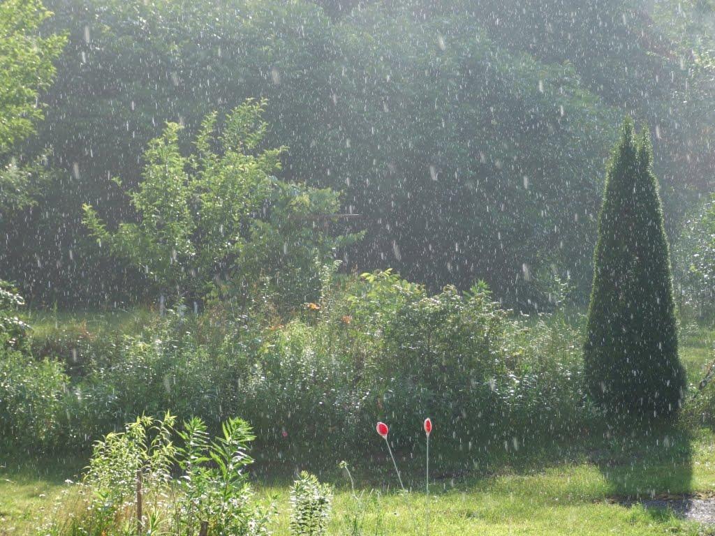 East Becket Gardens Seasonal Observations July  A Hot Summer! # Sun Shower Eli_082440