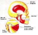 Músculos da Mastigação