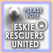 PLEASE VOTE!  Shelter:  Eskie; State: CT