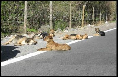 No mas perros abandonados No mas abandono de perros