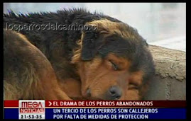 Reportaje Megavisión