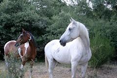 Mustang y Claudio