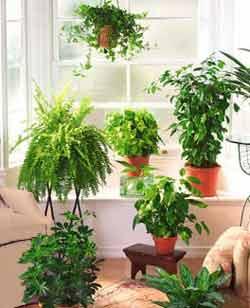 Cuidados para tus plantas de interior - Plantas de interior cuidados ...