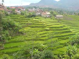 manazir indonesia