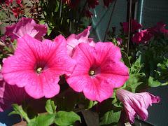 i fiori di rebecca