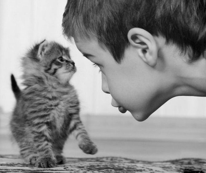 Funny+Photos+of+Kids+and+Animals+%25289%2529 Cute  Photos of Kids and Animals image gallery