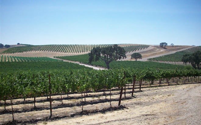 Vines at Pomar Junction Vineyard in Late Summer, Templeton