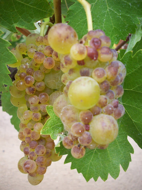 tropical viognier