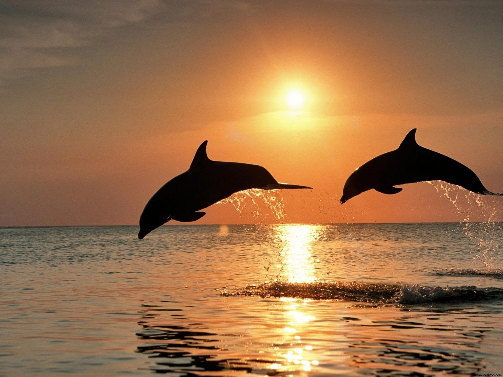 World Wonder Images: Dolphins Wallpapers
