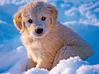 new year winter puppy wishes