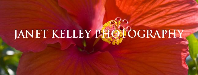 JANET KELLEY PHOTOGRAPHY