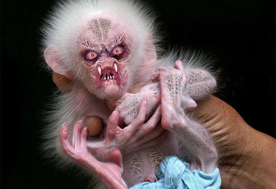 the ozplasmic critter emporium: cute baby monkey