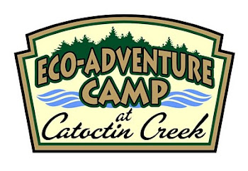 Eco-Adventure Camp 2014