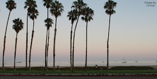 Santa Barbara, CA Palm Trees in the Evening