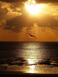 Manto de alegría en lugar de espíritu angustiado