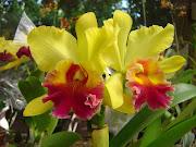 As flores da primavera – desconhecido. Neste entardecer tão belo…