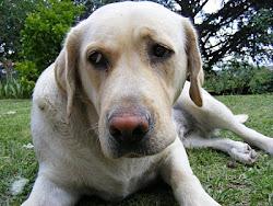 Hola, soy Gala la  nueva perra de Héctor LU3HKA