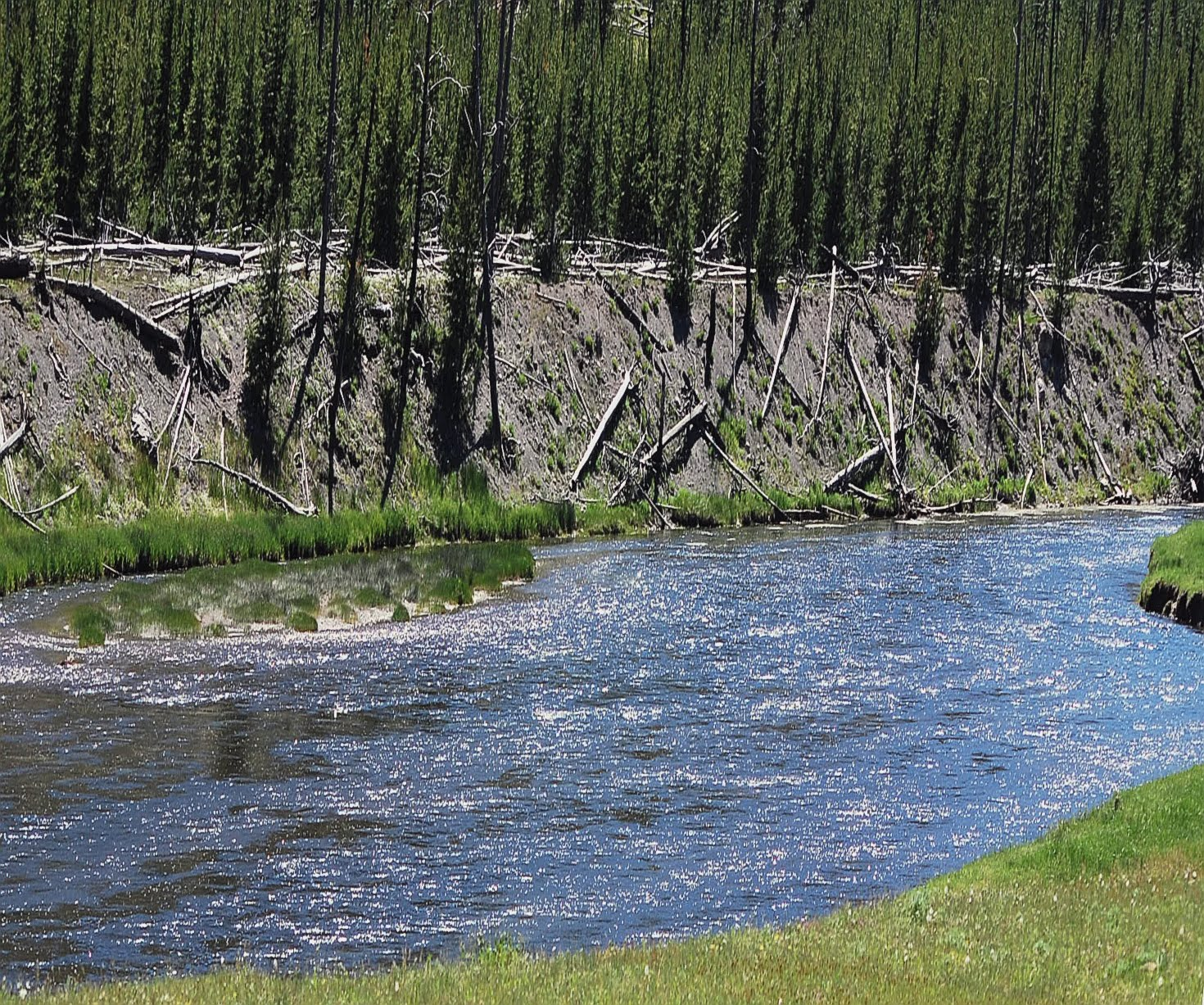 Fly fishing in yellowstone national park gentleman 39 s hours for Fishing in yellowstone