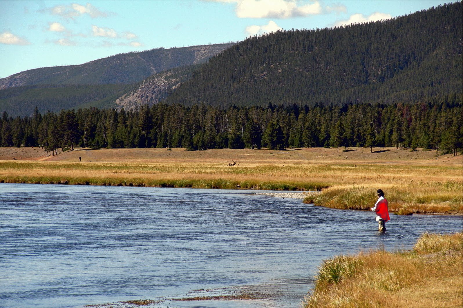 Fly fishing in yellowstone national park too damn nice for Yellowstone national park fishing