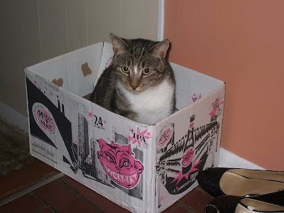 mr. king custard in the cheshire cat beer box by the high heels in the