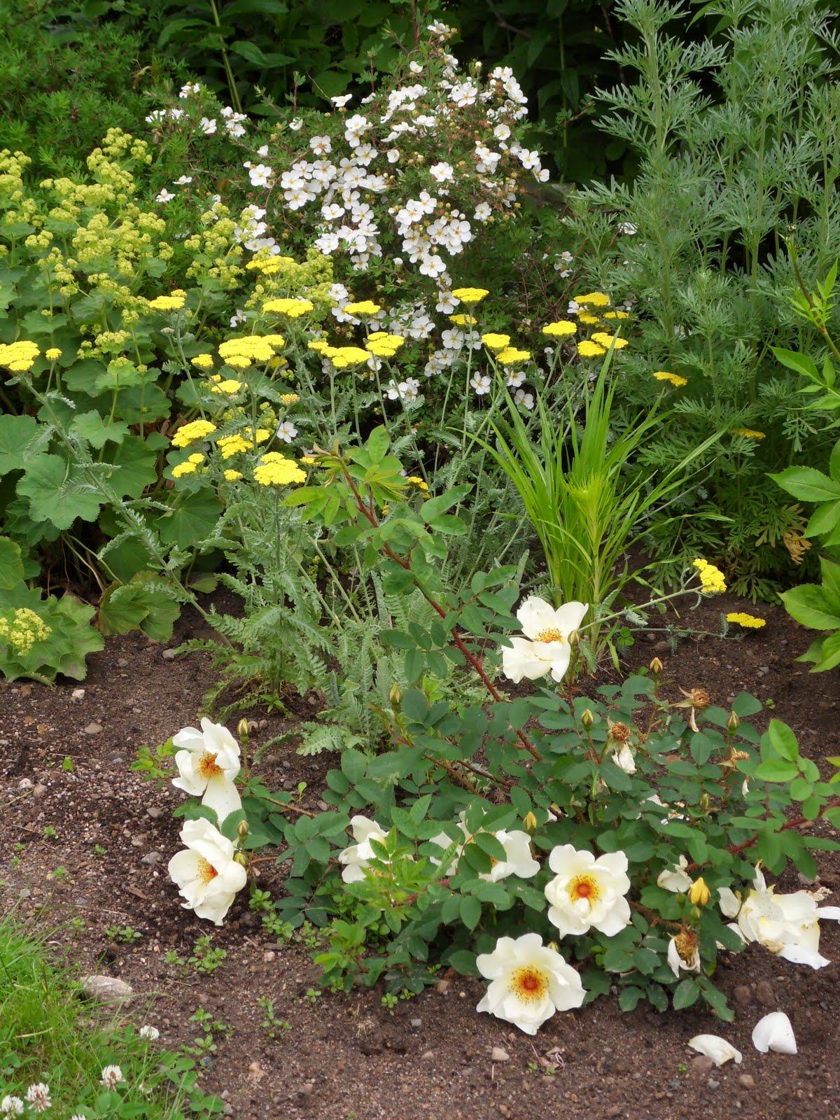 Hageliv og hagedesign: Det gule bedet ved pallekarmene tar form