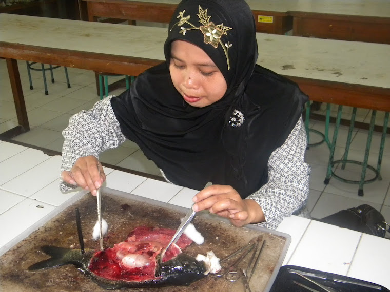Ikannya Korban Biologi
