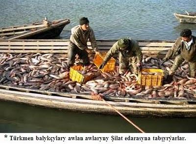 * Türkmen balykçylary awlan awlaryny Şilat edarasyna tabşyrýarlar.