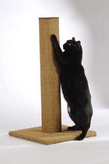 Old Black Cat Boo Wednesdays Helpful Tip 5