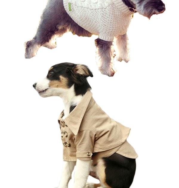 nu massage doggy style