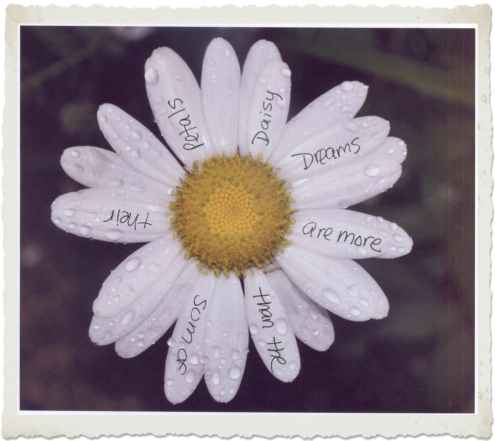 Bug's Eye Vi... Poems About Daisy Flowers