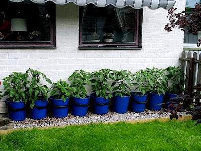 Växthus För Balkong : Hannu på kinnekulle växthussverige d