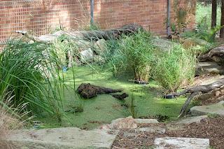 Backyard Frog Pond nature at school: frog pond