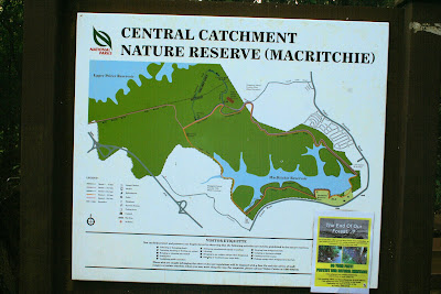 The Main Entrance To Macritchie Reservoir Is On Lornie Rd There Are Facilities With Toilets Parking And A Visitors Centre Continue Along